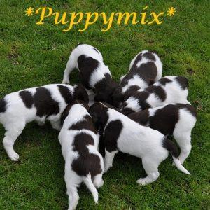 Puppymix / Jongenhondenmix